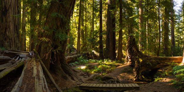 contemplative forest spot ~d nelson