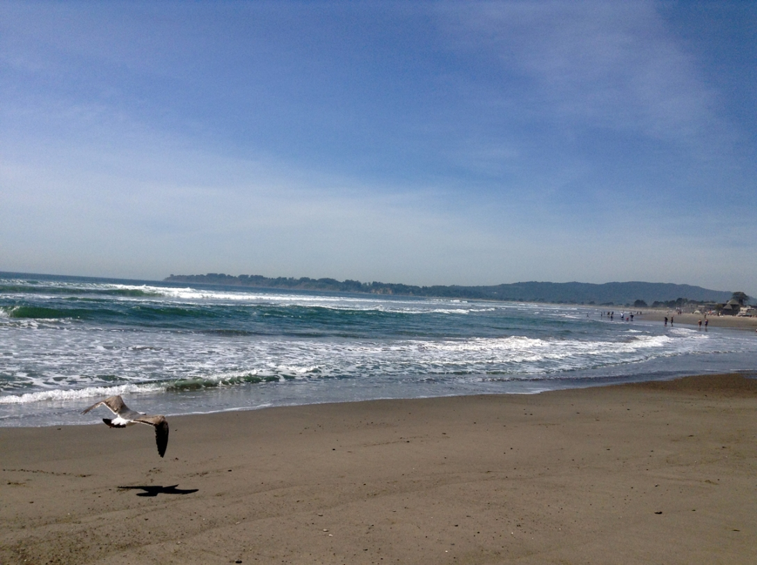 Stinson Beach and a Seagull Caught In Flight