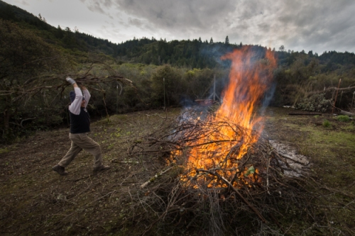 feeding inner fires ~d nelson