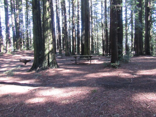 Madrone Picnic Area, Where the Blossom Rock Navigation Trees once stood.