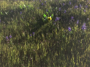 Spring wildflowers in the evening sun